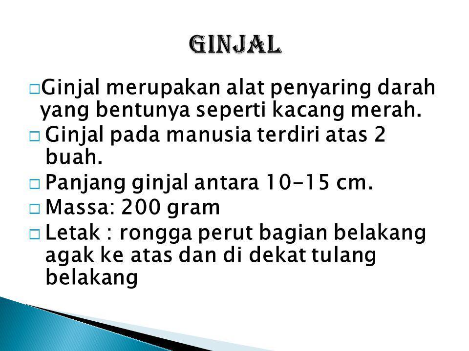 Komposisi urin yang dikeluarkan melalui uretra : 1.