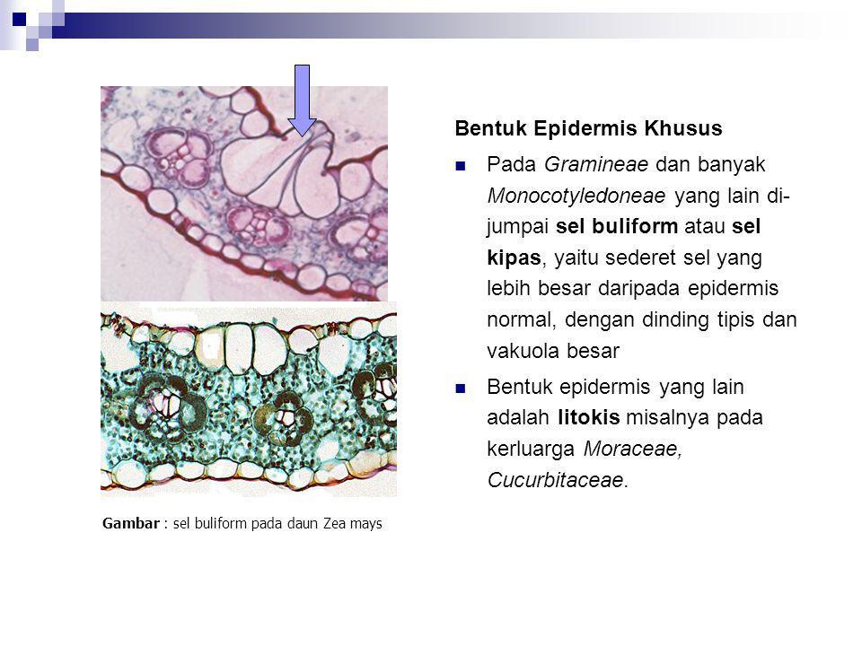 (modifikasi epidermis) Lytokis