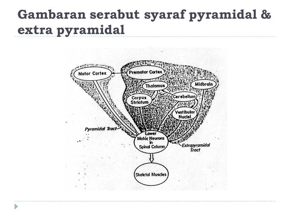 Gambaran serabut syaraf pyramidal & extra pyramidal