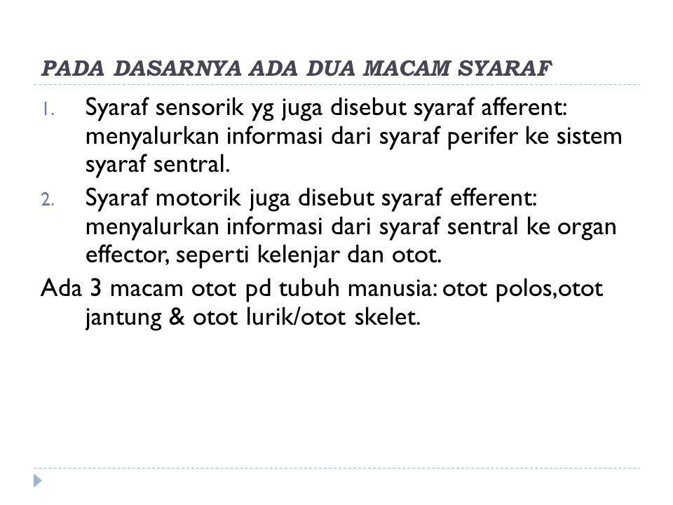 PADA DASARNYA ADA DUA MACAM SYARAF 1. Syaraf sensorik yg juga disebut syaraf afferent: menyalurkan informasi dari syaraf perifer ke sistem syaraf sent
