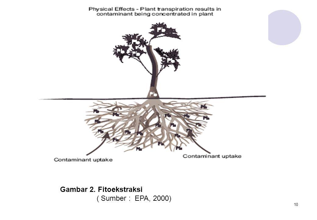 10 Gambar 2. Fitoekstraksi ( Sumber : EPA, 2000)