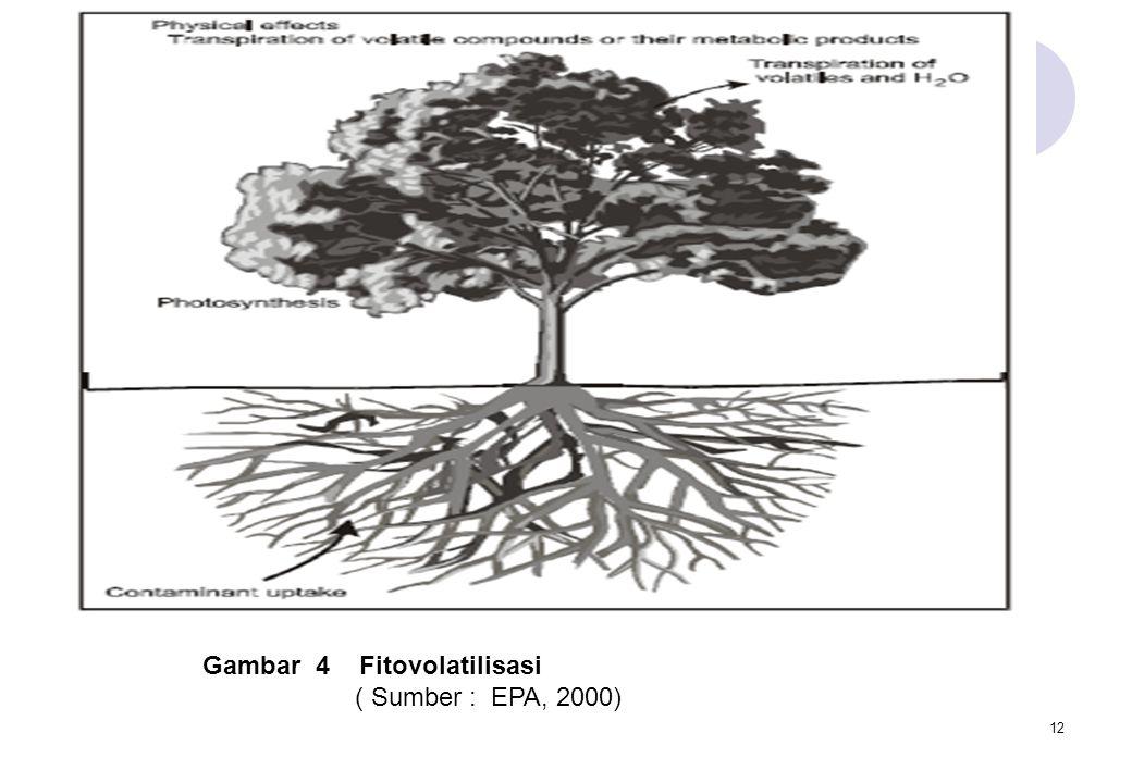 12 Gambar 4 Fitovolatilisasi ( Sumber : EPA, 2000)