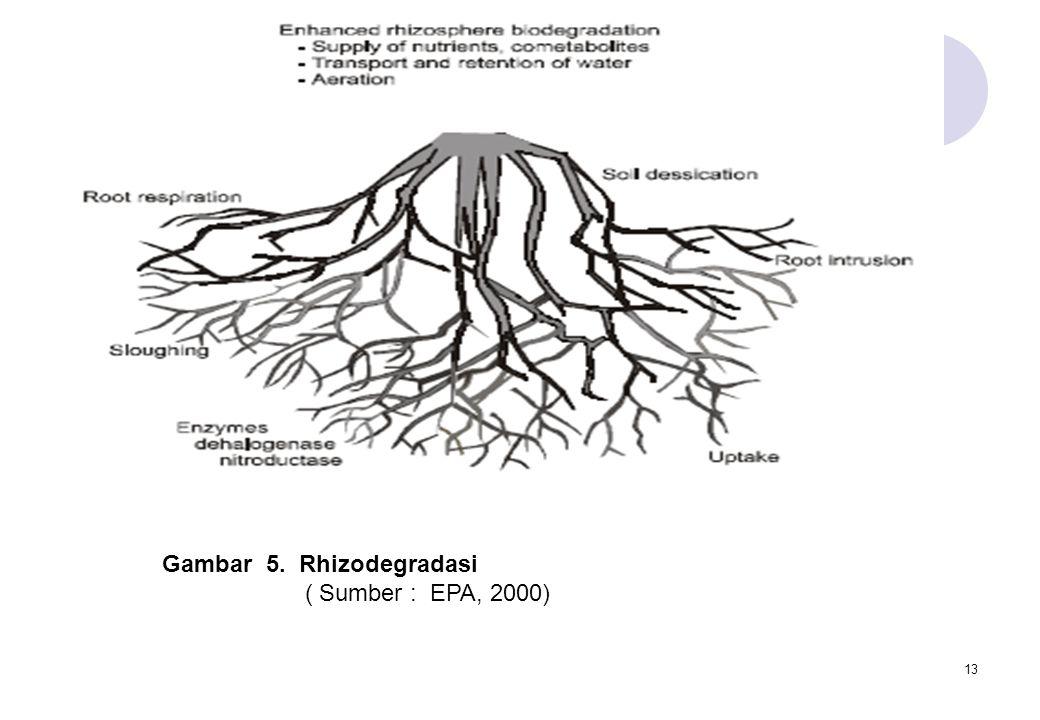 13 Gambar 5. Rhizodegradasi ( Sumber : EPA, 2000)