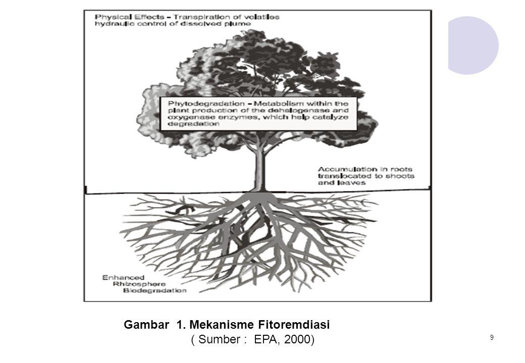 9 Gambar 1. Mekanisme Fitoremdiasi ( Sumber : EPA, 2000)