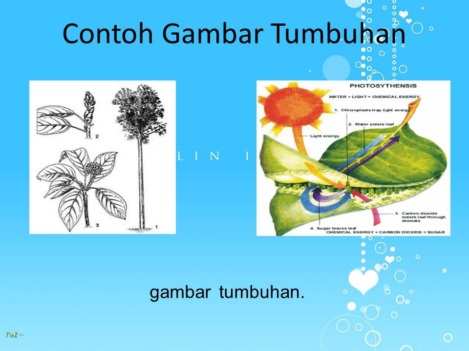 Contoh Gambar Tumbuhan gambar tumbuhan.