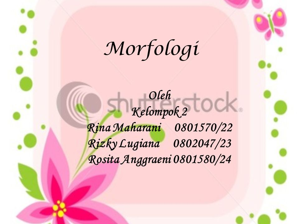 Morfologi Oleh Kelompok 2 Rina Maharani 0801570/22 Rizky Lugiana 0802047/23 Rosita Anggraeni 0801580/24