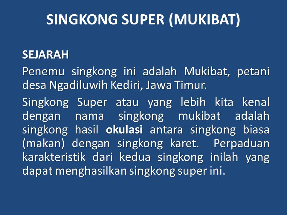 SINGKONG SUPER (MUKIBAT) SEJARAH Penemu singkong ini adalah Mukibat, petani desa Ngadiluwih Kediri, Jawa Timur.
