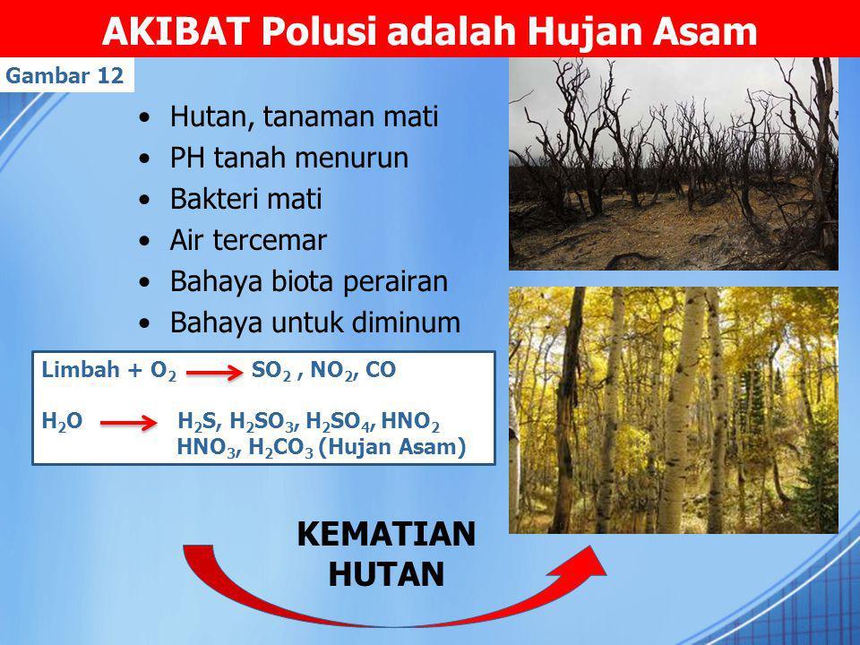 AKIBAT Polusi adalah Hujan Asam Hutan, tanaman mati PH tanah menurun Bakteri mati Air tercemar Bahaya biota perairan Bahaya untuk diminum Limbah + O 2 SO 2, NO 2, CO H 2 O H 2 S, H 2 SO 3, H 2 SO 4, HNO 2 HNO 3, H 2 CO 3 (Hujan Asam) Gambar 12 KEMATIAN HUTAN