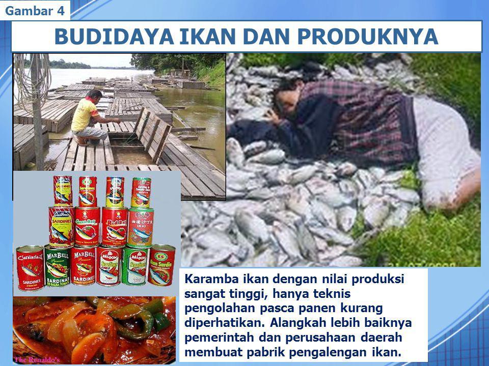 BUDIDAYA IKAN DAN PRODUKNYA Karamba ikan dengan nilai produksi sangat tinggi, hanya teknis pengolahan pasca panen kurang diperhatikan.