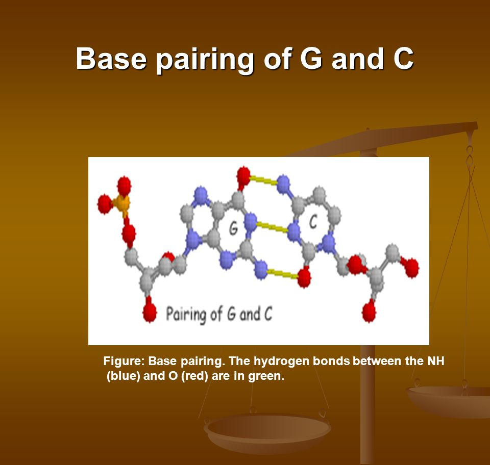 Base pairing of G and C Figure: Base pairing.