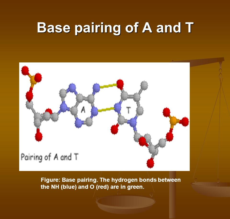 Base pairing of A and T Figure: Base pairing.