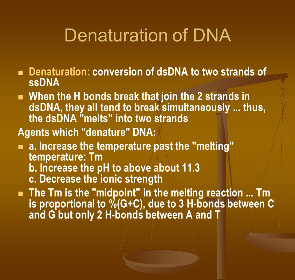 Denaturation of DNA Denaturation: conversion of dsDNA to two strands of ssDNA When the H bonds break that join the 2 strands in dsDNA, they all tend to break simultaneously...