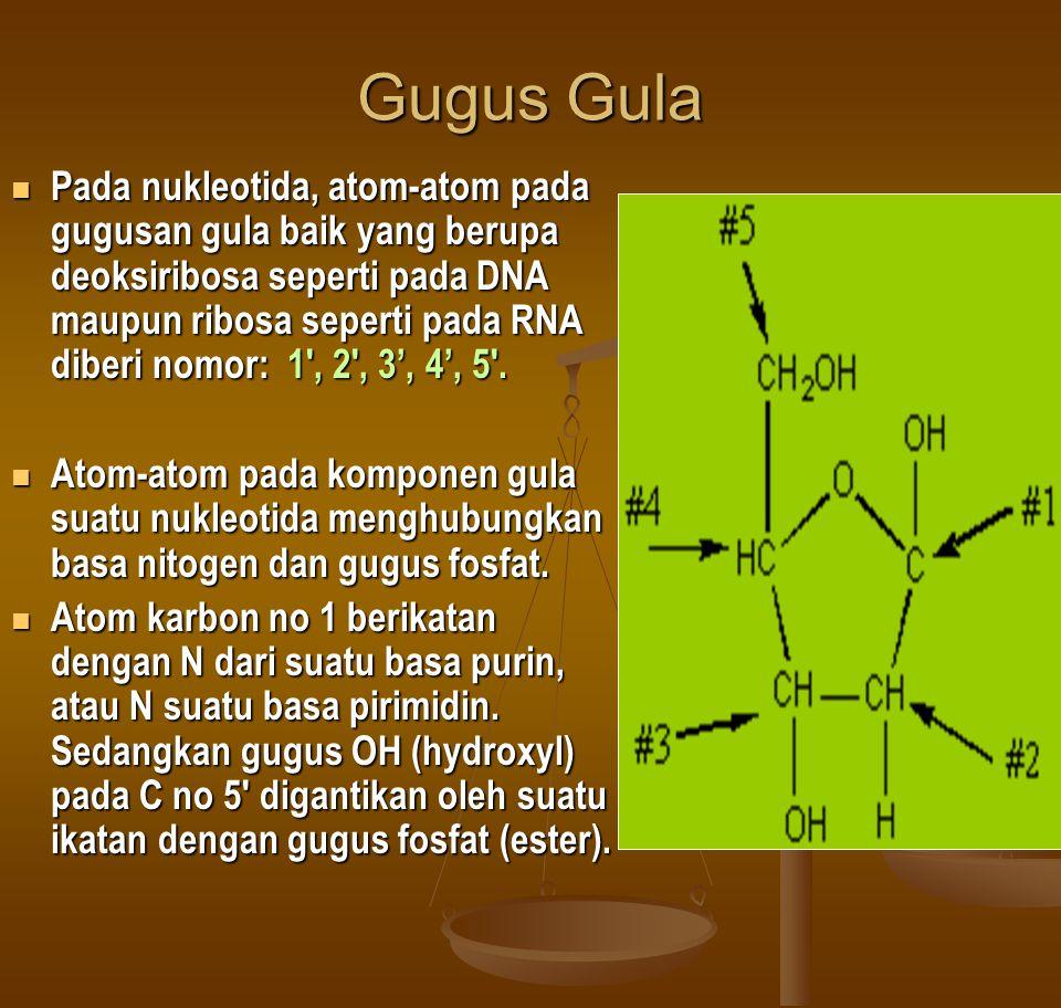 Gugus Gula Pada nukleotida, atom-atom pada gugusan gula baik yang berupa deoksiribosa seperti pada DNA maupun ribosa seperti pada RNA diberi nomor: 1 , 2 , 3', 4', 5 .