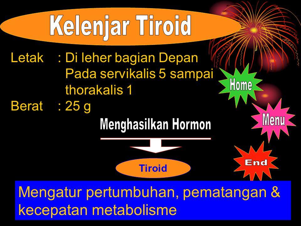 Tiroid Letak: Di leher bagian Depan Pada servikalis 5 sampai thorakalis 1 Berat: 25 g Mengatur pertumbuhan, pematangan & kecepatan metabolisme