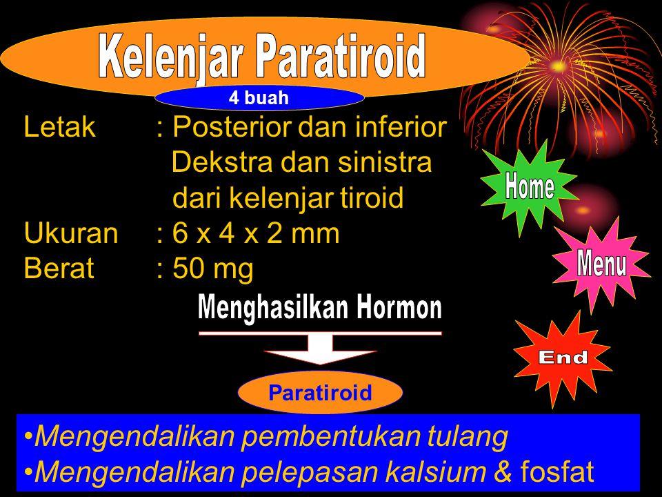 Paratiroid Letak: Posterior dan inferior Dekstra dan sinistra dari kelenjar tiroid Ukuran: 6 x 4 x 2 mm Berat: 50 mg Mengendalikan pembentukan tulang Mengendalikan pelepasan kalsium & fosfat 4 buah