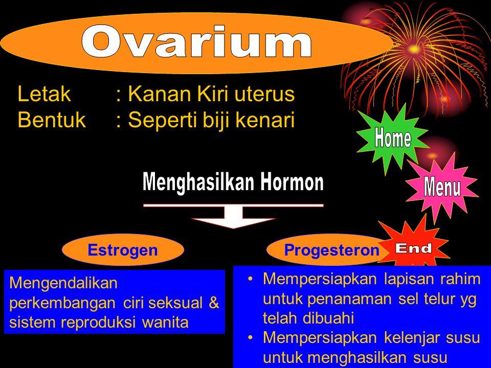 ProgesteronEstrogen Letak: Kanan Kiri uterus Bentuk: Seperti biji kenari Mempersiapkan lapisan rahim untuk penanaman sel telur yg telah dibuahi Mempersiapkan kelenjar susu untuk menghasilkan susu Mengendalikan perkembangan ciri seksual & sistem reproduksi wanita