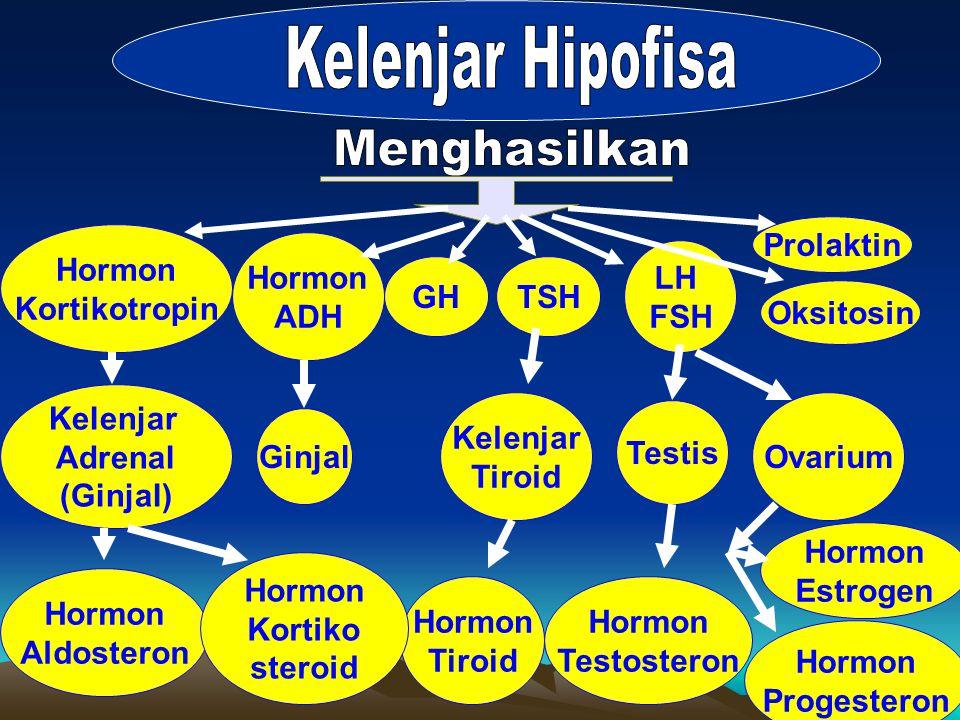 GH LH FSH TSH Oksitosin Prolaktin Hormon Kortikotropin Hormon ADH Kelenjar Adrenal (Ginjal) Kelenjar Tiroid Ginjal Hormon Tiroid Testis Ovarium Hormon Testosteron Hormon Estrogen Hormon Progesteron Hormon Aldosteron Hormon Kortiko steroid
