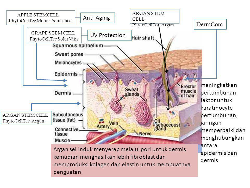 APPLE STEMCELL PhytoCellTec Malus Domestica GRAPE STEM CELL PhytoCellTec Solar Vitis ARGAN STEM CELL PhytoCellTec Argan Anti-Aging UV Protection ARGAN