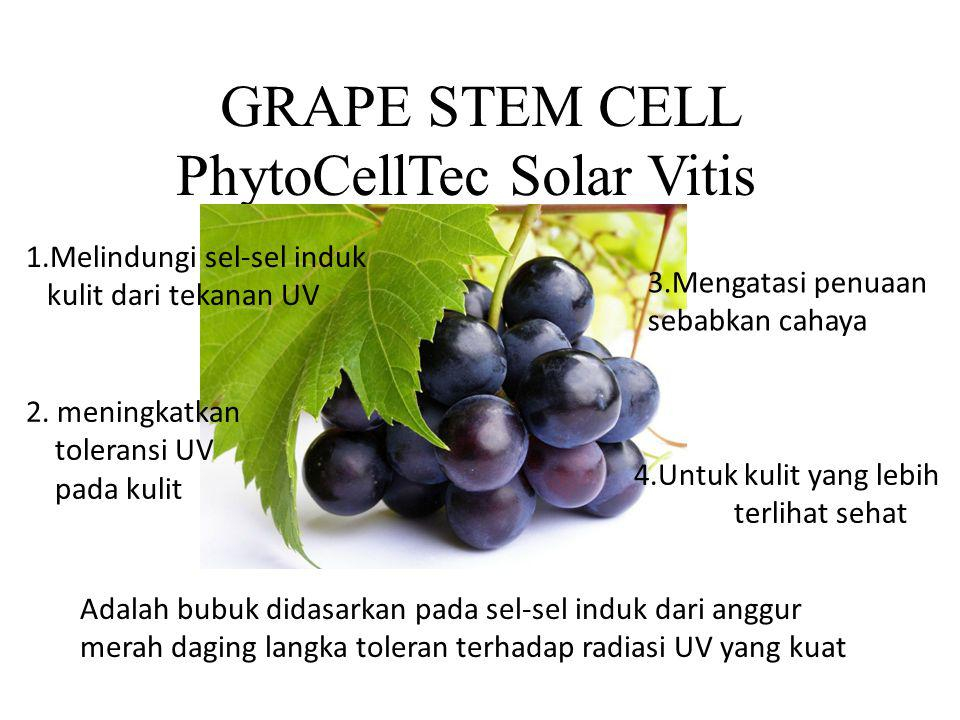 GRAPE STEM CELL PhytoCellTec Solar Vitis 1.Melindungi sel-sel induk kulit dari tekanan UV 2. meningkatkan toleransi UV pada kulit 3.Mengatasi penuaan