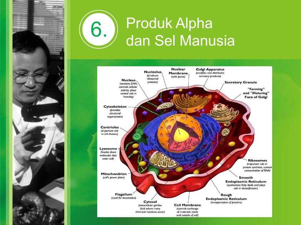6. Produk Alpha dan Sel Manusia