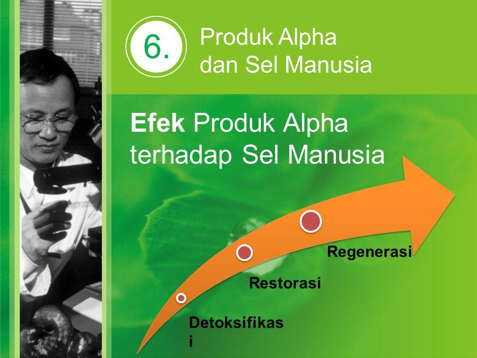 6. Produk Alpha dan Sel Manusia Efek Produk Alpha terhadap Sel Manusia Detoksifikas i Restorasi Regenerasi