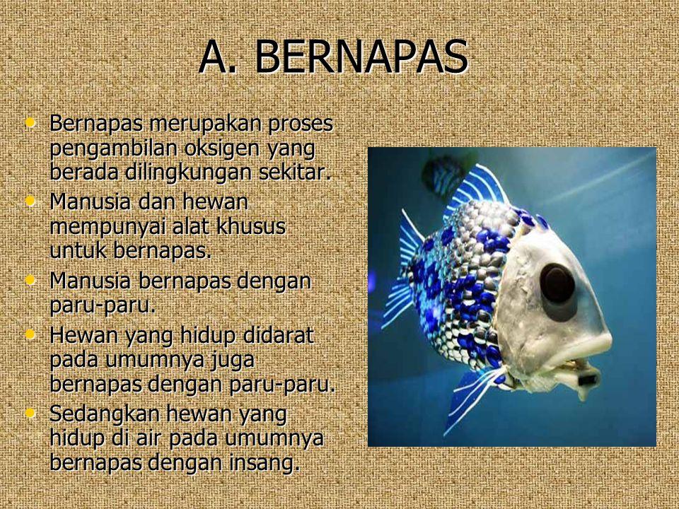 A. BERNAPAS Bernapas merupakan proses pengambilan oksigen yang berada dilingkungan sekitar. Bernapas merupakan proses pengambilan oksigen yang berada