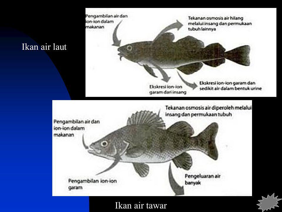 Ikan air tawar Ikan air laut