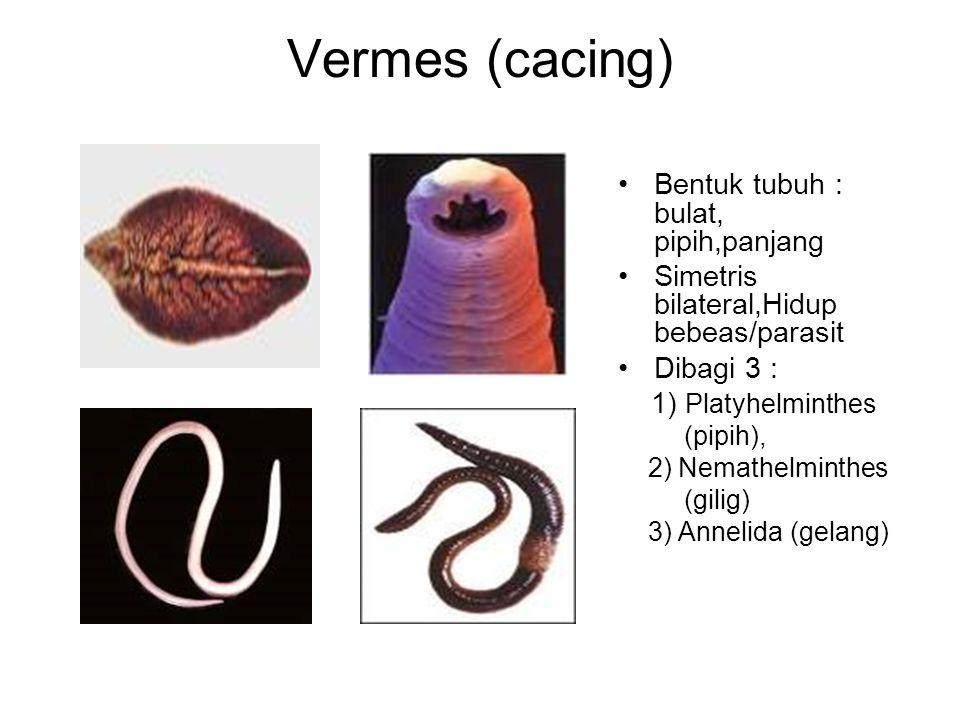 Vermes (cacing) Bentuk tubuh : bulat, pipih,panjang Simetris bilateral,Hidup bebeas/parasit Dibagi 3 : 1) Platyhelminthes (pipih), 2) Nemathelminthes