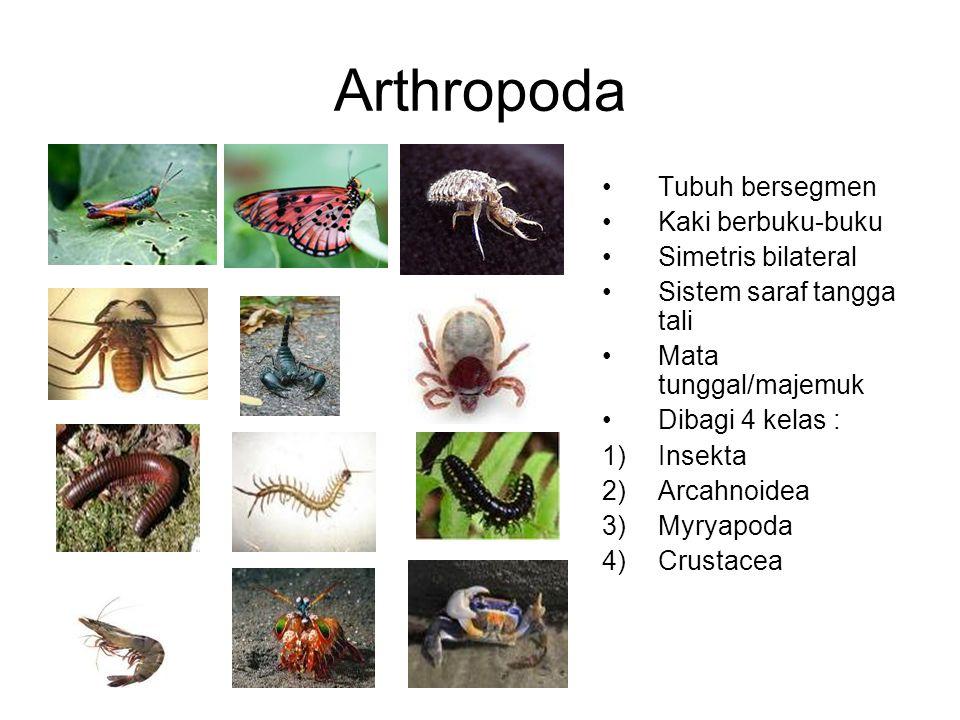Arthropoda Tubuh bersegmen Kaki berbuku-buku Simetris bilateral Sistem saraf tangga tali Mata tunggal/majemuk Dibagi 4 kelas : 1)Insekta 2)Arcahnoidea
