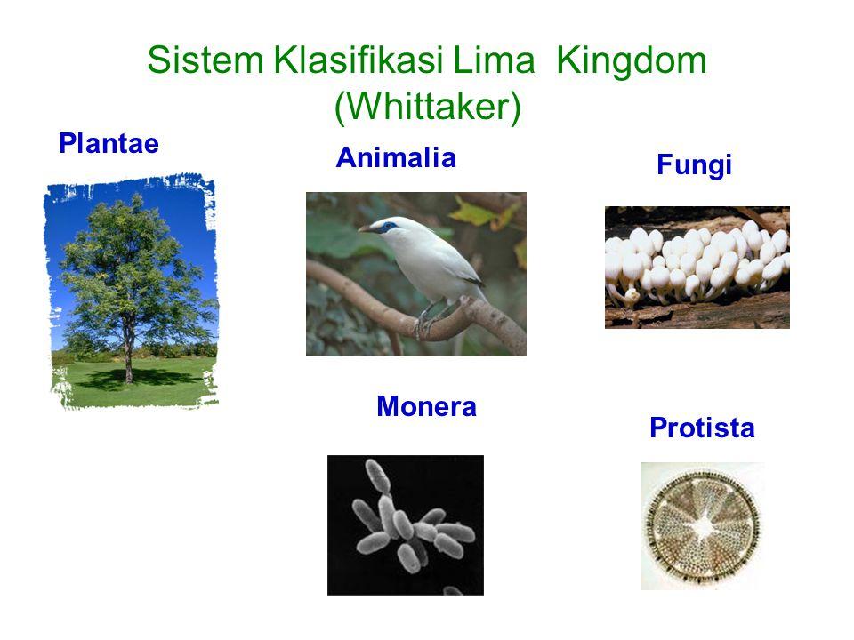 Sistem Klasifikasi Lima Kingdom (Whittaker) Plantae Animalia Fungi Protista Monera