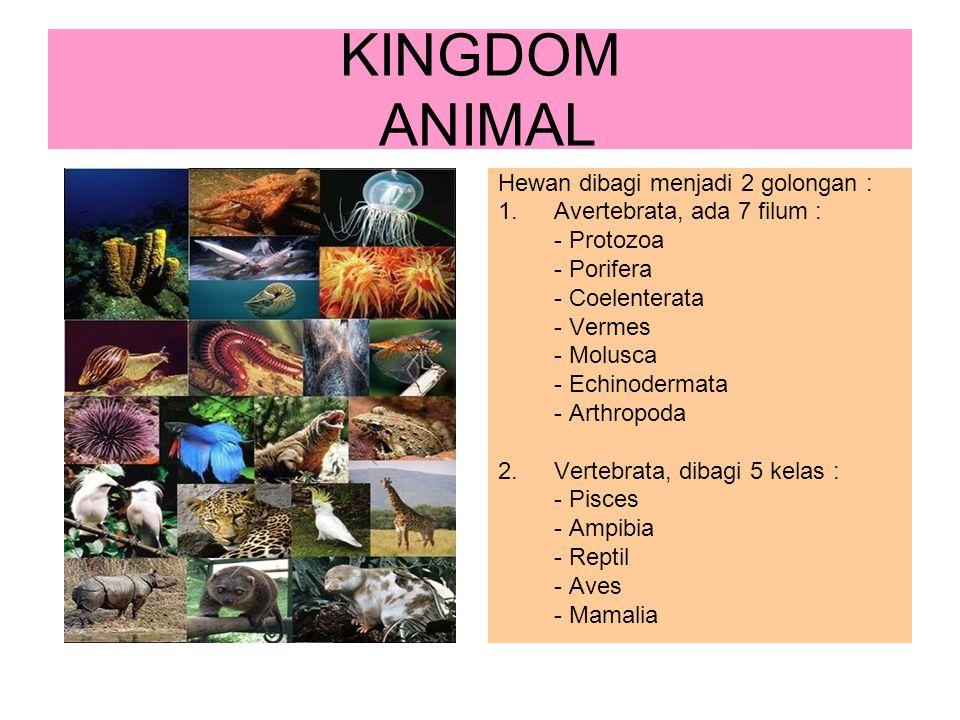 KINGDOM ANIMAL Hewan dibagi menjadi 2 golongan : 1.Avertebrata, ada 7 filum : - Protozoa - Porifera - Coelenterata - Vermes - Molusca - Echinodermata
