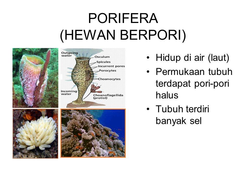 PORIFERA (HEWAN BERPORI) Hidup di air (laut) Permukaan tubuh terdapat pori-pori halus Tubuh terdiri banyak sel