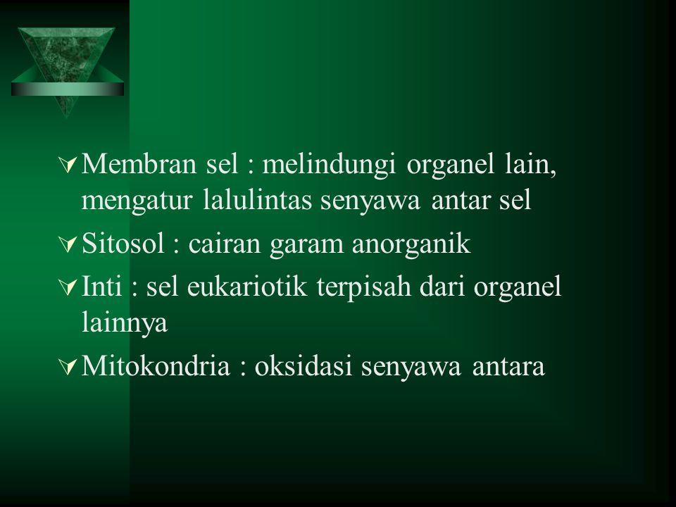 ORGANEL DALAM SEL HIDUP Inti sel Dinding sel Membran sel Vakuola Sitoplasma Endoplasmik retikulum Ribosoma Mitokondria Kloroplas