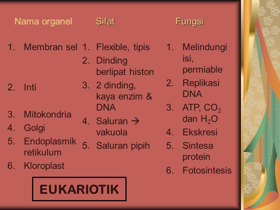 Nama organel 1.Dinding sel 2.Daerah inti 3.Ribosoma 4.Granula 5.Sitosol 1.Kaku, polisakarida, peptida 2.DNA helix ganda 3.RNA, protein 4.Penyimpan 5.T