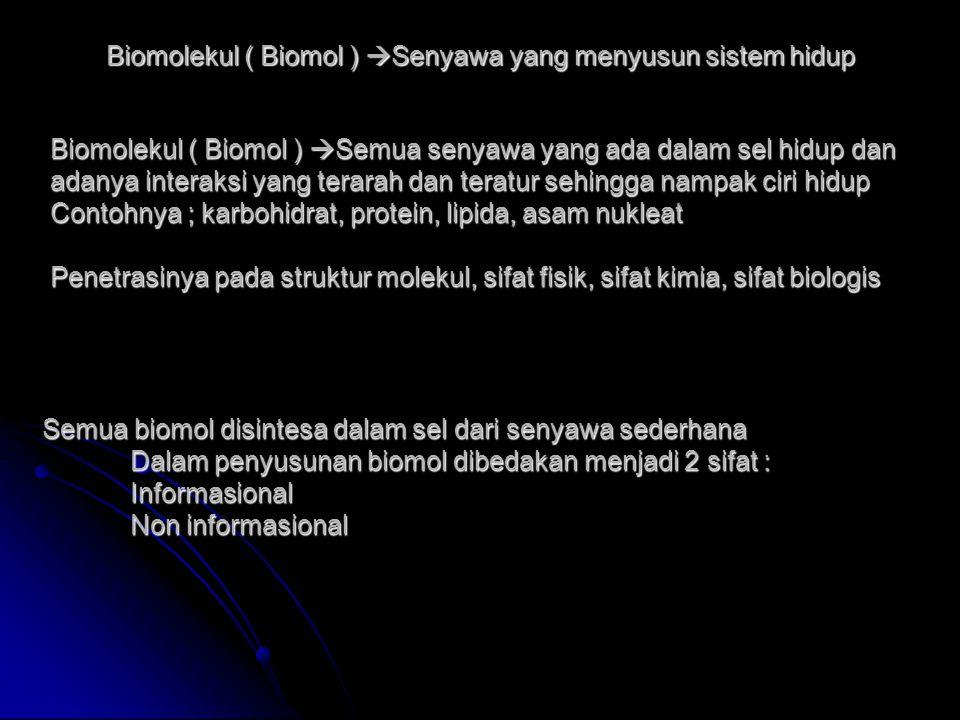 Biomolekul ( Biomol )  Senyawa yang menyusun sistem hidup Biomolekul ( Biomol )  Senyawa yang menyusun sistem hidup Biomolekul ( Biomol )  Semua senyawa yang ada dalam sel hidup dan adanya interaksi yang terarah dan teratur sehingga nampak ciri hidup Contohnya ; karbohidrat, protein, lipida, asam nukleat Penetrasinya pada struktur molekul, sifat fisik, sifat kimia, sifat biologis Biomolekul ( Biomol )  Semua senyawa yang ada dalam sel hidup dan adanya interaksi yang terarah dan teratur sehingga nampak ciri hidup Contohnya ; karbohidrat, protein, lipida, asam nukleat Penetrasinya pada struktur molekul, sifat fisik, sifat kimia, sifat biologis Semua biomol disintesa dalam sel dari senyawa sederhana Dalam penyusunan biomol dibedakan menjadi 2 sifat : Informasional Non informasional