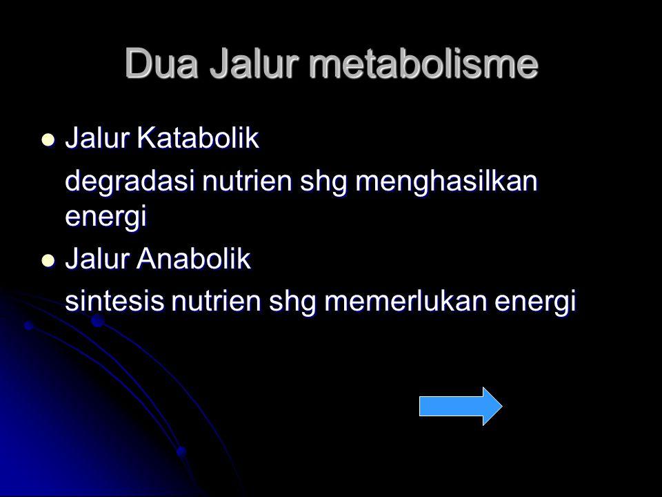 Dua Jalur metabolisme Jalur Katabolik Jalur Katabolik degradasi nutrien shg menghasilkan energi Jalur Anabolik Jalur Anabolik sintesis nutrien shg memerlukan energi