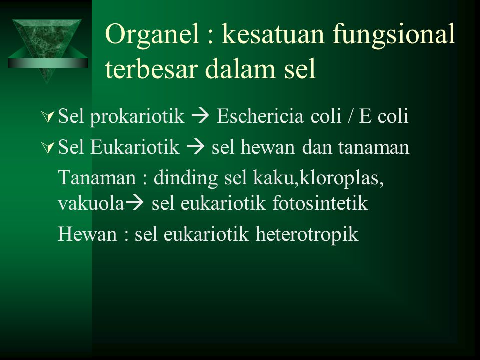 Organel : kesatuan fungsional terbesar dalam sel  Sel prokariotik  Eschericia coli / E coli  Sel Eukariotik  sel hewan dan tanaman Tanaman : dinding sel kaku,kloroplas, vakuola  sel eukariotik fotosintetik Hewan : sel eukariotik heterotropik