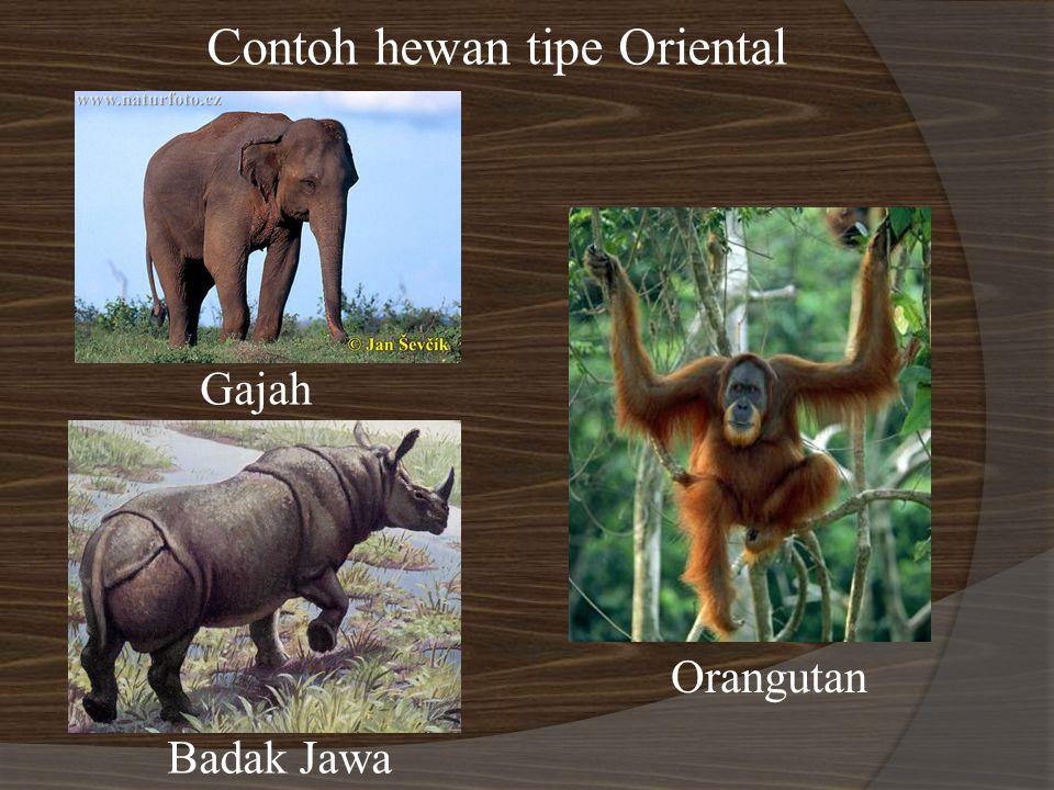 Contoh hewan tipe Oriental Gajah Badak Jawa Orangutan