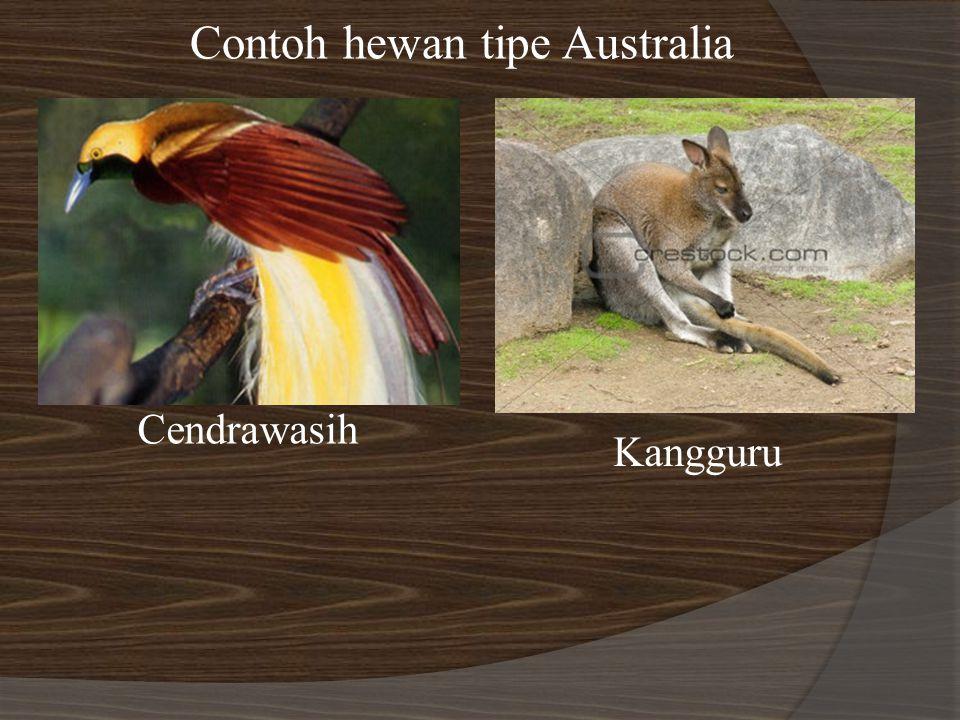 Contoh hewan tipe Australia Cendrawasih Kangguru