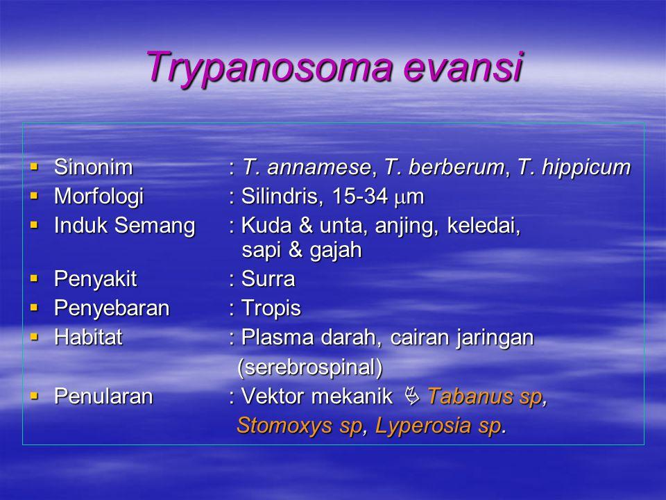 Trypanosoma evansi  Sinonim: T. annamese, T. berberum, T. hippicum  Morfologi : Silindris, 15-34  m  Induk Semang : Kuda & unta, anjing, keledai,