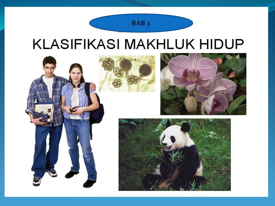 Kingdom Plantae (Tumbuhan) Kingdom tumbuhan terdiri atas berbagai macam tumbuhan,  tumbuhan lumut,  tumbuhan paku, dan  tumbuhan biji.