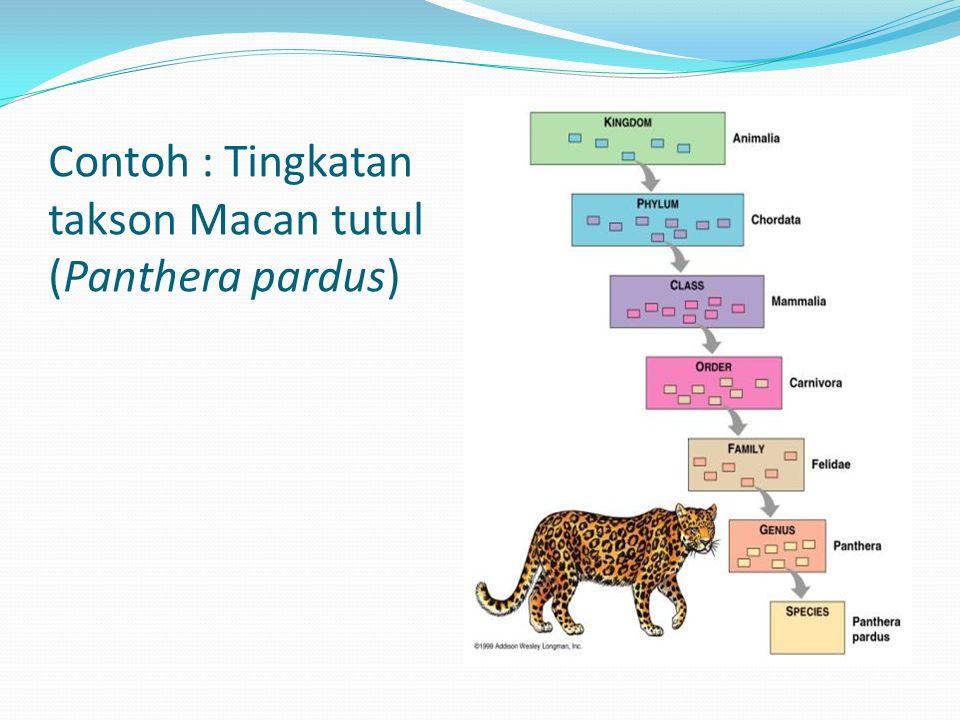 Contoh : Tingkatan takson Macan tutul (Panthera pardus)