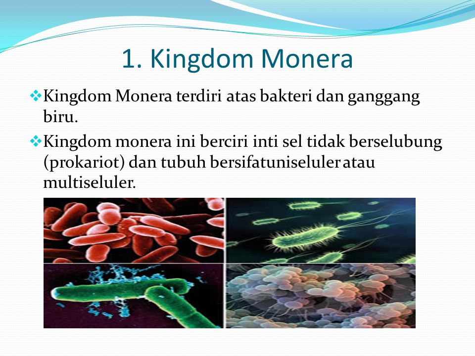 1. Kingdom Monera  Kingdom Monera terdiri atas bakteri dan ganggang biru.  Kingdom monera ini berciri inti sel tidak berselubung (prokariot) dan tub