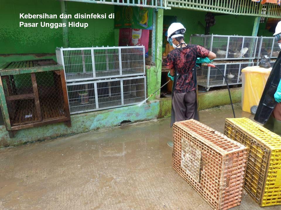 Kebersihan dan disinfeksi di Pasar Unggas Hidup
