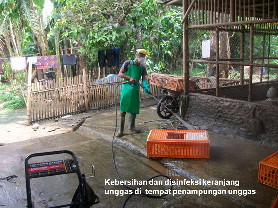 Kebersihan dan disinfeksi keranjang unggas di tempat penampungan unggas