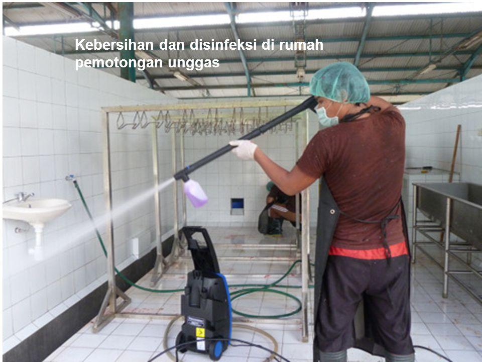 Kebersihan dan disinfeksi di rumah pemotongan unggas