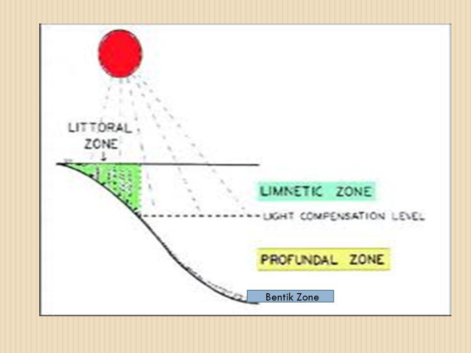 Bentik Zone