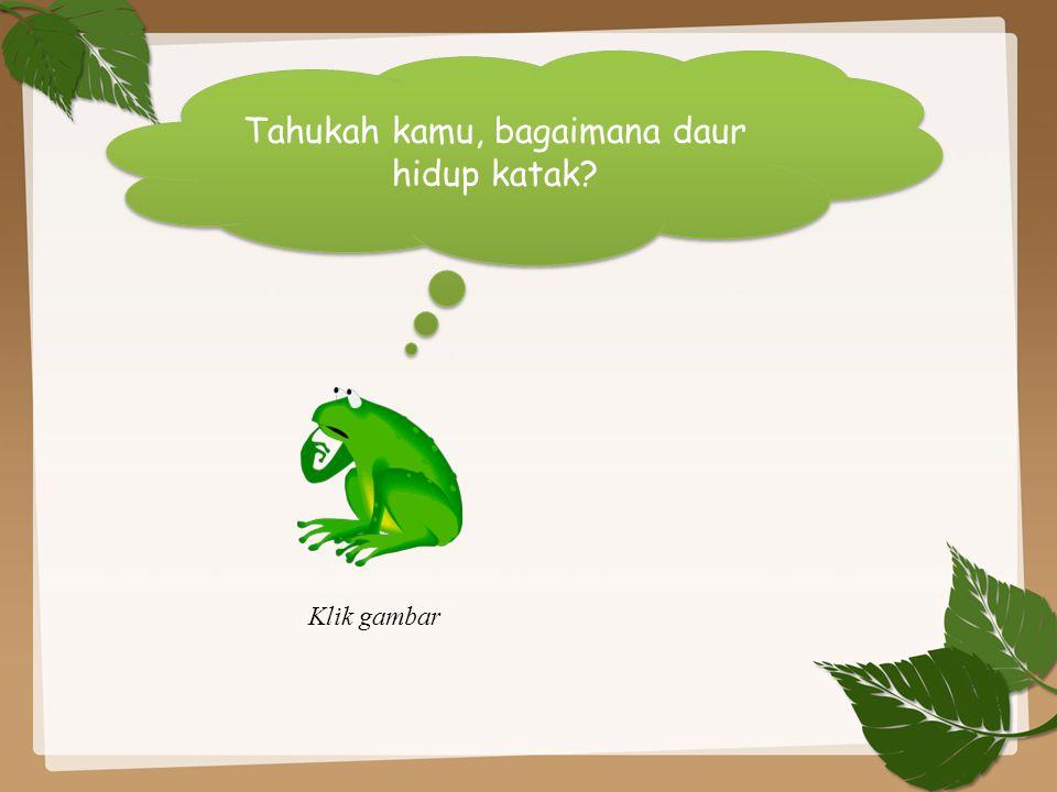 Tahukah kamu, bagaimana daur hidup katak? Klik gambar