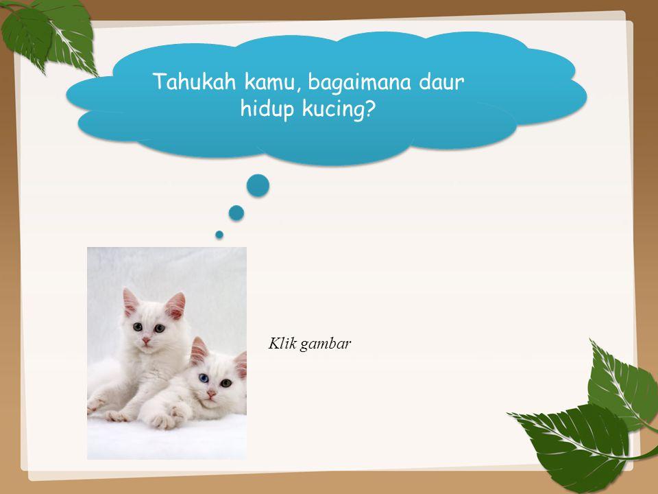 Tahukah kamu, bagaimana daur hidup kucing? Klik gambar