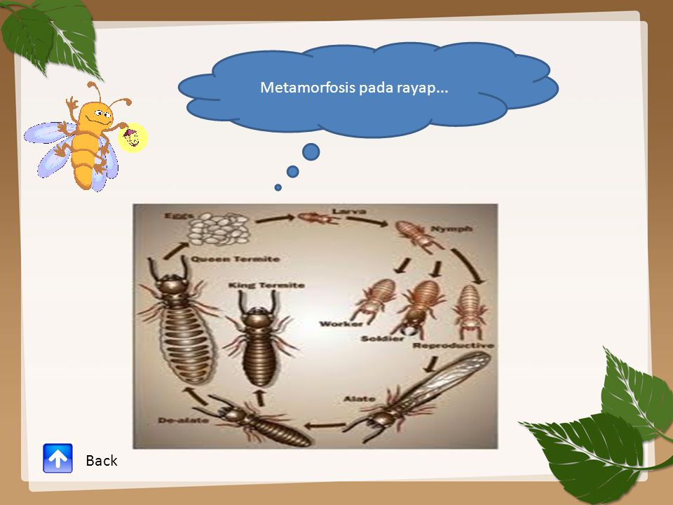 Metamorfosis pada rayap... Back